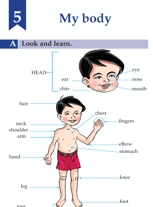English Lesson Grade A My Body