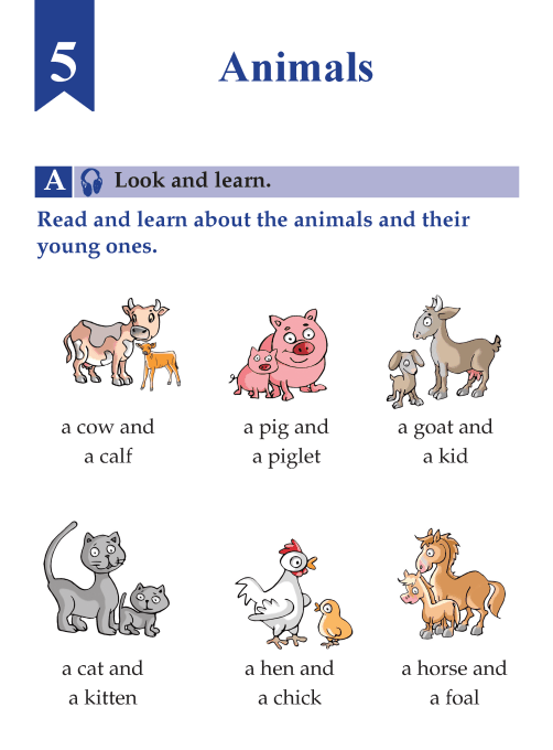 English Lesson Grade B Animals